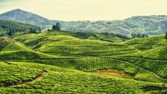 Где купить хороший чай